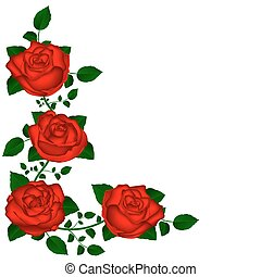 vine of red roses vine of red roses vector illustration of...