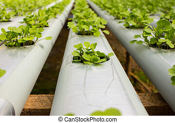 Baby Plants Growing in Hydroponic System - Garden of Baby...