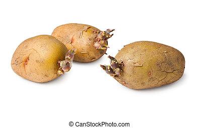 papa, semillas, -, tres, Tubérculos, blanco