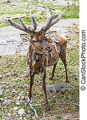 Deer with antlers chic