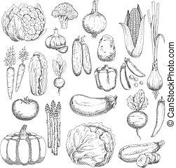 Wholesome farm vegetables sketches set - Organic farm fresh...