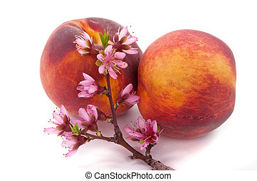 Peach Blossom and Fruit - Peach blossom and peach fruit