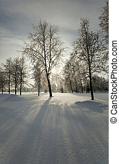 Winter Park with snow - trees in the park in winter the...