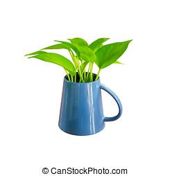 planta, en, blanco, aislado, Plano de fondo, con, Recorte,...