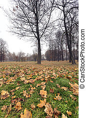 Autumn Park, overcast - a park in the autumn, during cloudy...