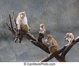 asia monkey family on tree, Thailand