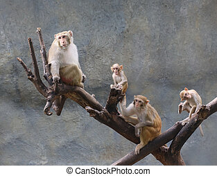 asia monkey family on tree, Thailand