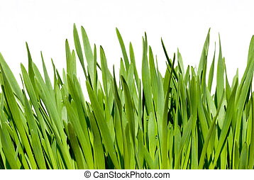 grass isolated over white background