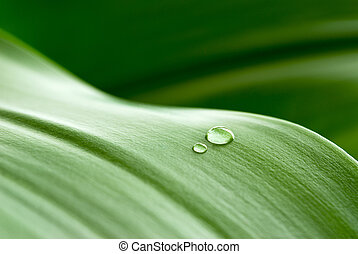 crystalline drops on leaf - cristal clear drops on a green...