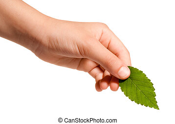 hand holding a leaf - young hand holding a green leaf...