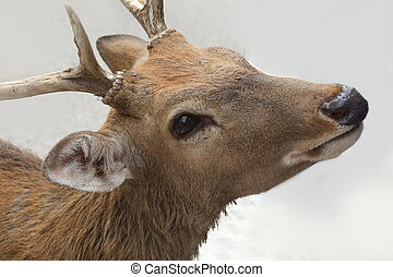 close up deer head