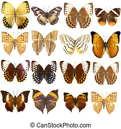 Collection of beautiful tropical butterflies isolated on...