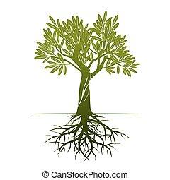 oliva, vettore, verde, albero