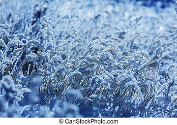 Frozen grass in the mountain