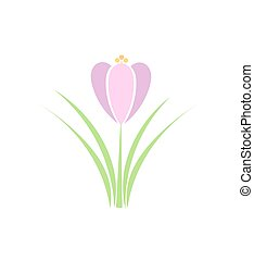 Spring Crocus flower Vector illustration