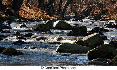 river rock tree autumn 4k