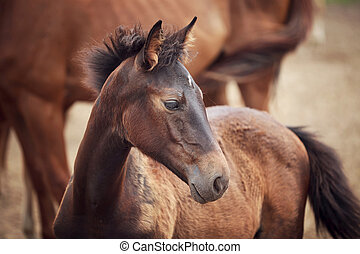 Foal near its mother - Portrait of the foal near its mother...