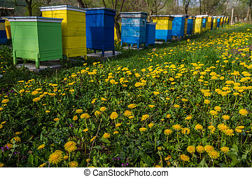 Bee hives in spring garden - Bee hives on spring garden with...