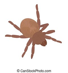 Big brown fluffy spider Tarantula isolated on white - Big...