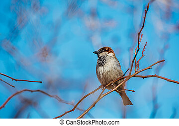 Little sparrow sitting on a tree branch.