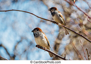Little sparrows sitting on a tree branch