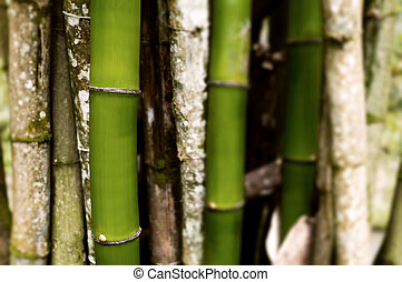 Section of bamboo trees grouped together background