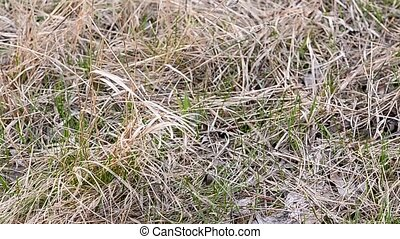The first green grass in spring