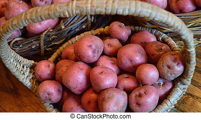 Widescreen size of basket with small red new potatoes -...