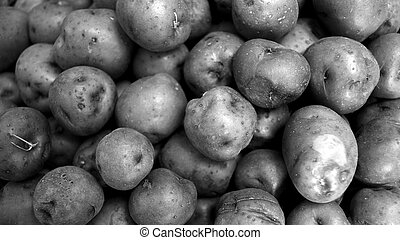 Black and white red potato background in widescreen -...
