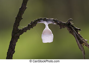 cocoon - white small cocoon on tree\'s branch