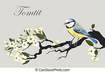 Tomtit on the cherry branch - Vector illustration of tomtit...
