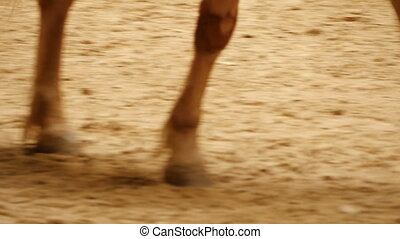 quot;Close up of horse feet, hoofquot; - Close up of horse...
