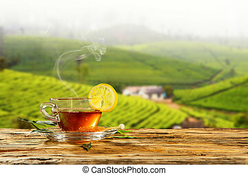Cup of hot tea with plantation on background - Cup of hot...