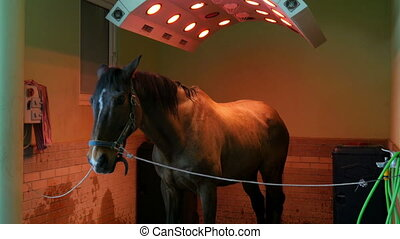 quot;Horse health care in stable, washing, cleaning and...