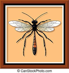 Sand wasp Entomological exhibit - Wasp in the frame Vector...