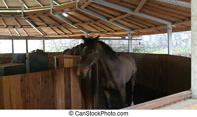 Horses running in walking exercise machine in stables