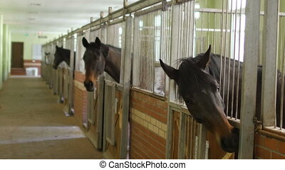 """Horses in stable, interior"""