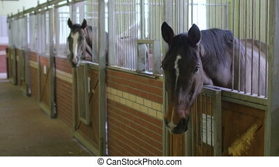 quot;Horses in stable, interiorquot; - Horses in stable,...