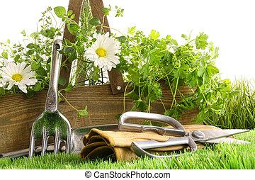frais, Herbes, bois, boîte, Outils