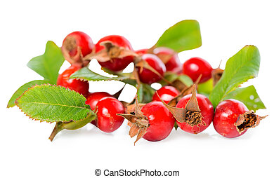 beautiful rosehip twigs with leaves and red ripe berries or...