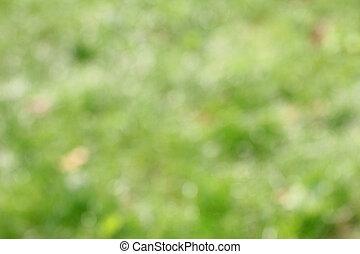 green grass background - a green grass background
