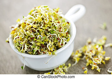 Alfalfa sprouts in a cup - Organic young alfalfa sprouts in...
