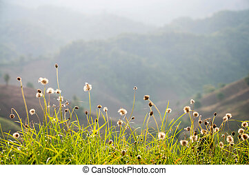 mountains meadow and flower spring season in floral natual -...