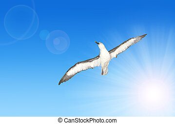 Wandering Albatross (Diomedea exulans) in flight