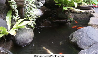 Close up of goldfish in a pond outdoors