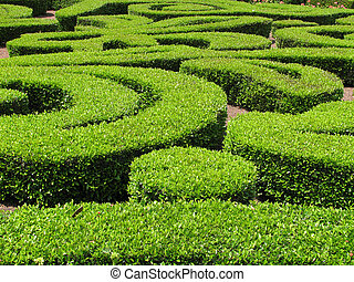 Green Ornamental Bushes - Green Ornamental Bush and Shrub...