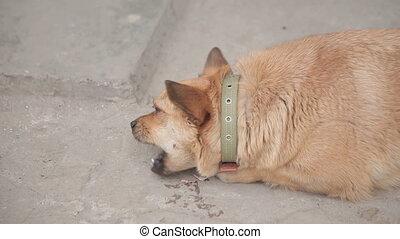 funny dog eats bone
