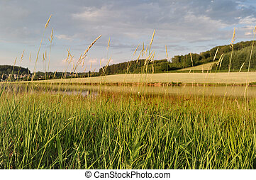 grass in front of a lake