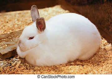 Cute rabbit with white fur is stitting - Cute rabbit with...