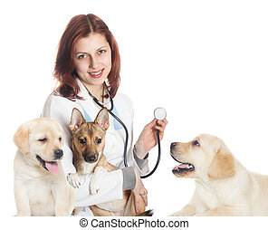 veterinarian and puppies on a white background isolated